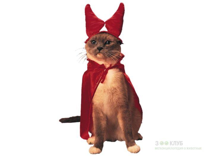 Кот в костюме дьявола, фото фотография картинка обои