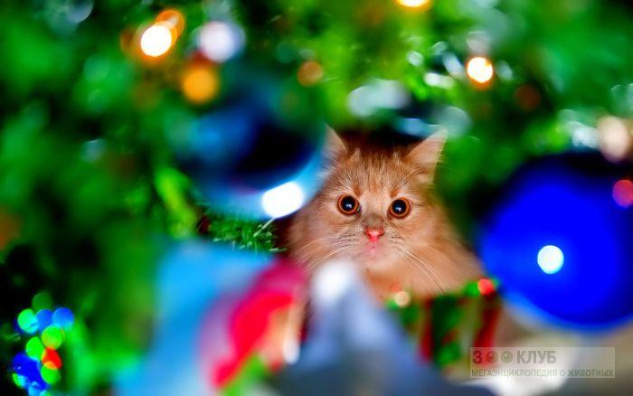 Кот и елочные украшения, фото фотография картинка обои