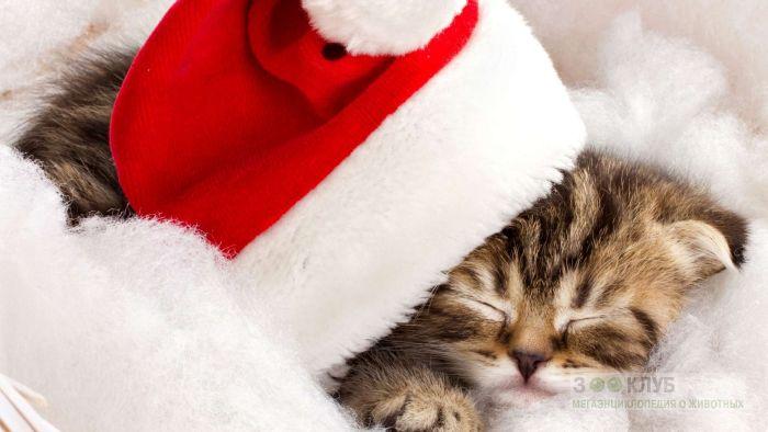 Спящий котенок, фото обои фотография картинка
