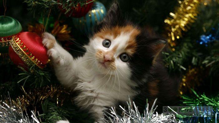 Котенок спрятался в новогодней елке, фото фотография картинка обои