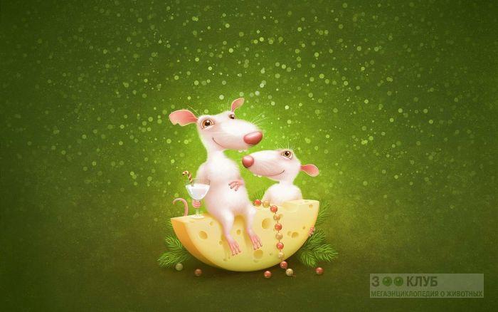 Крысы и сыр картинка, фото фотография картинка обои