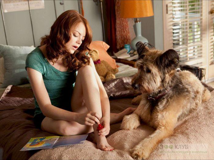 Бриар и девушка, фото фотография картинка обои