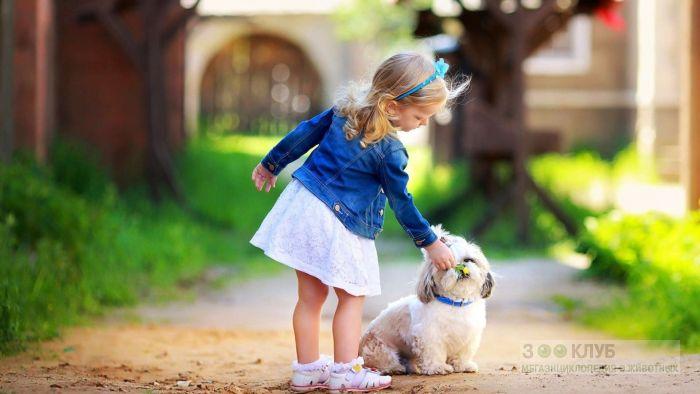 Девочка и ши-тцу, фото фотография картинка обои
