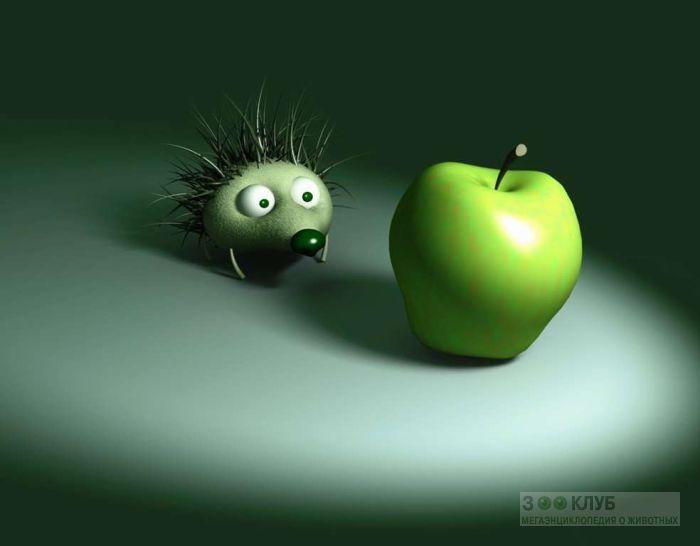 Ежик любуется яблоком, 3D картинка обои
