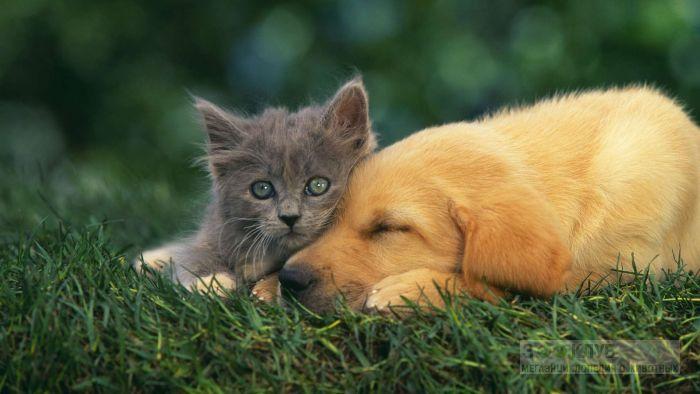 Серый котенок и щенок, прикольная смешная картинка фото