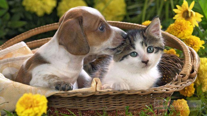 Щенок и котенок в корзине, прикольное фото смешная картинка