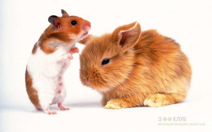 Хомячок и рыжий карликовый кролик, прикольное фото смешная картинка