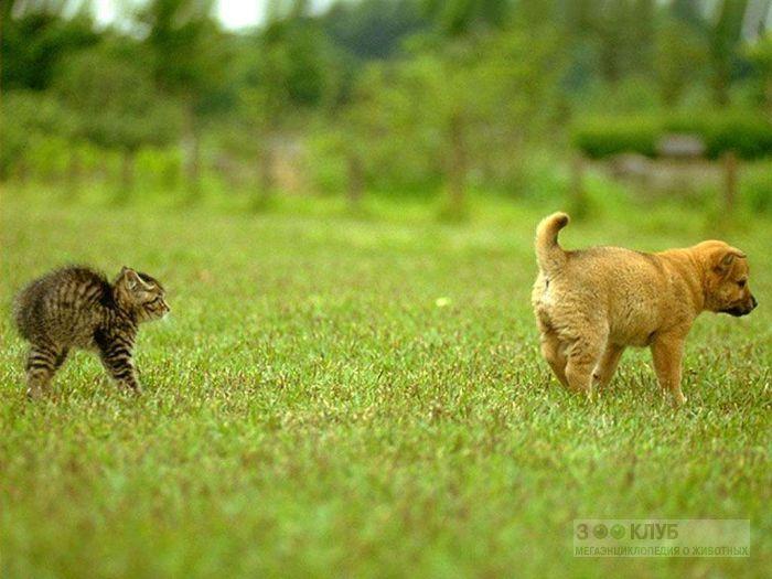 Котенок, испугавшийся щенка, прикольное фото смешная картинка