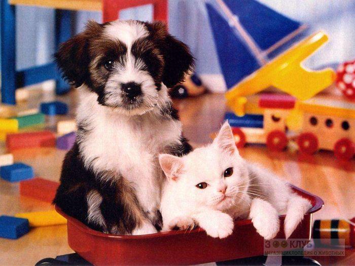 Щенок и белый кот, прикольное фото смешная картинка