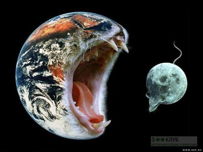 Кошка-планета пытается съесть мышь-луну, прикольное фото смешная картинка