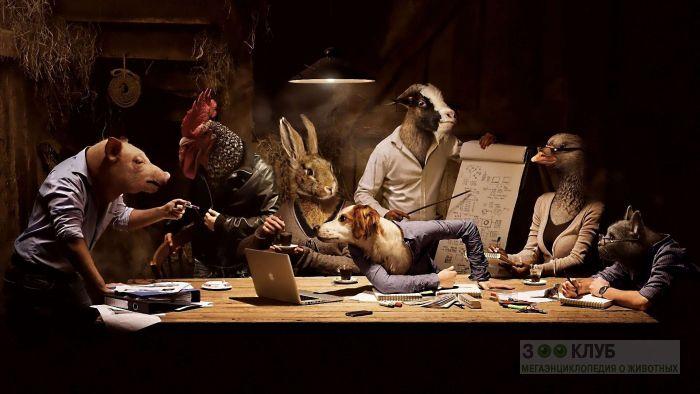 Собрание животных, прикольное фото смешная картинка