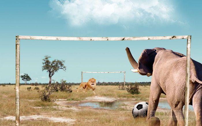 Слон и лев играют в футбол, прикольное фото смешная картинка
