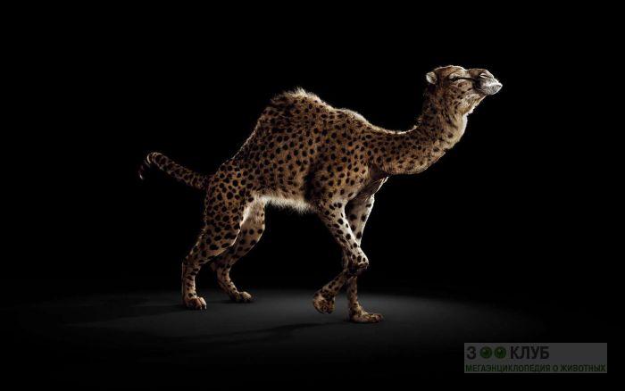 Ученые скрестили верблюда с жирафом, прикольное фото смешная картинка