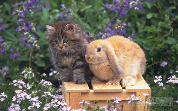 Котенок и баран (карликовый кролик), прикольное фото смешная картинка