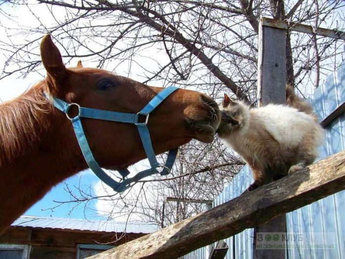 Кошка трется головой о морду лошади, прикольное фото смешная картинка