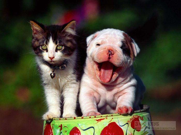Маленький щенок и котенок, прикольное фото смешная картинка