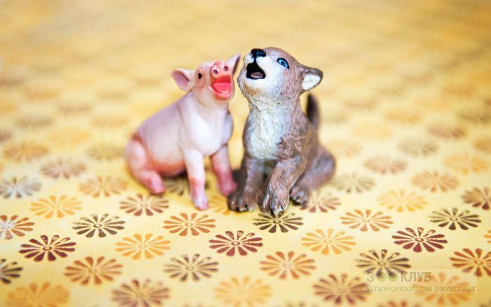 Фигурки волчонка и поросенка, прикольное фото смешная картинка