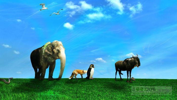 Коллаж диких животных, прикольное фото смешная картинка