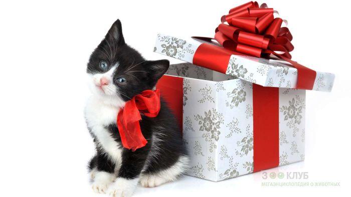 Котенок - новогодний подарок, фото фотография картинка обои