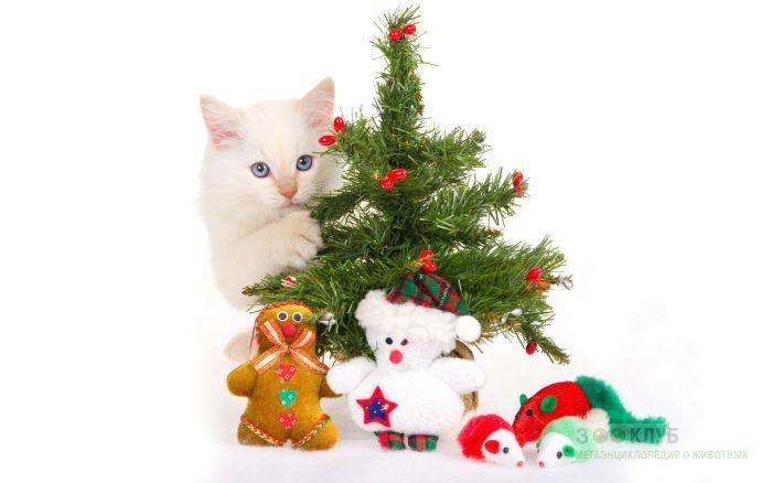 Кремовый котенок прячется за елкой, фото фотография картинка обои