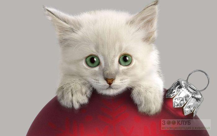 Котенок лежит на елочном шаре, фото фотография картинка обои