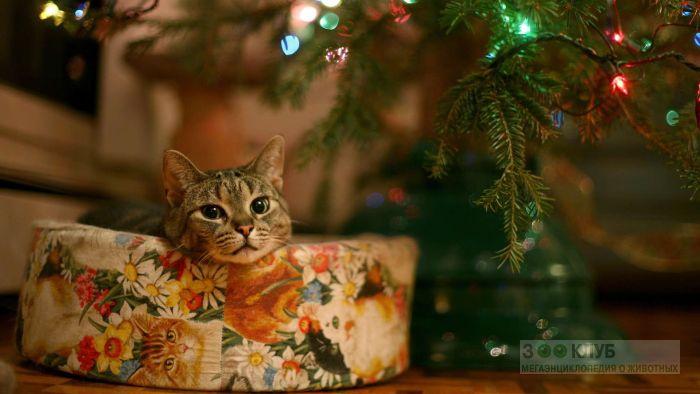 Кот под ёлкой, фото фотография картинка обои