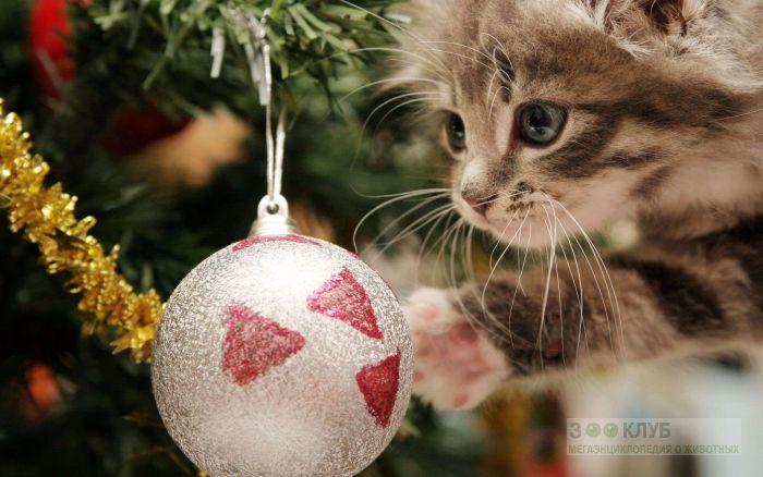 Котенок и серебрянный шар, фото фотография картинка обои