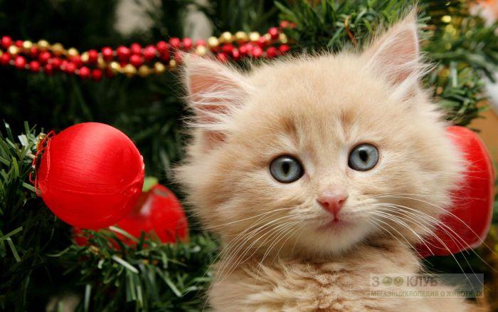 Рыжий котенок новогодние картинки