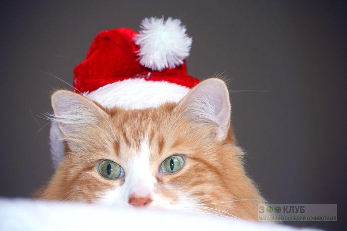 Рыжий кот, фото фотография картинка обои