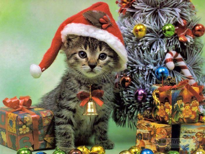 Котенок около новогодней елки, фото фотография картинка обои