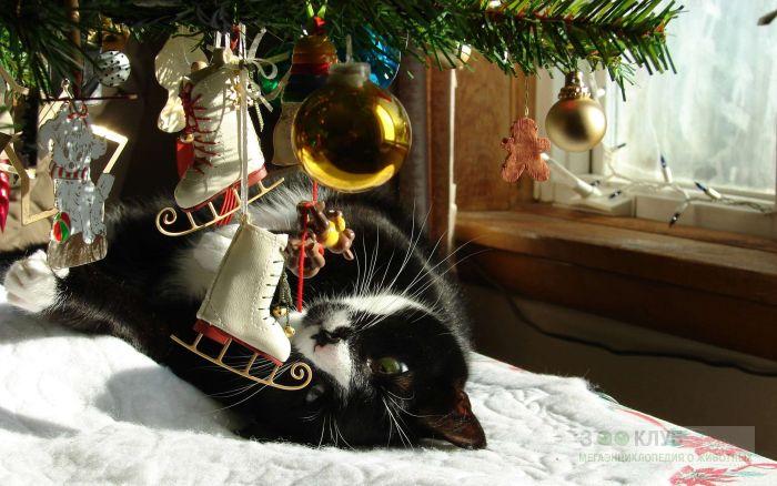 Кот и елка, фото фотография картинка обои