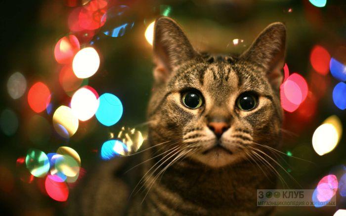 Кошка, фото фотография картинка обои