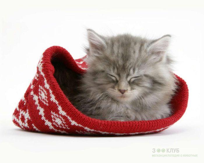 Серый котенок, фото фотография картинка обои