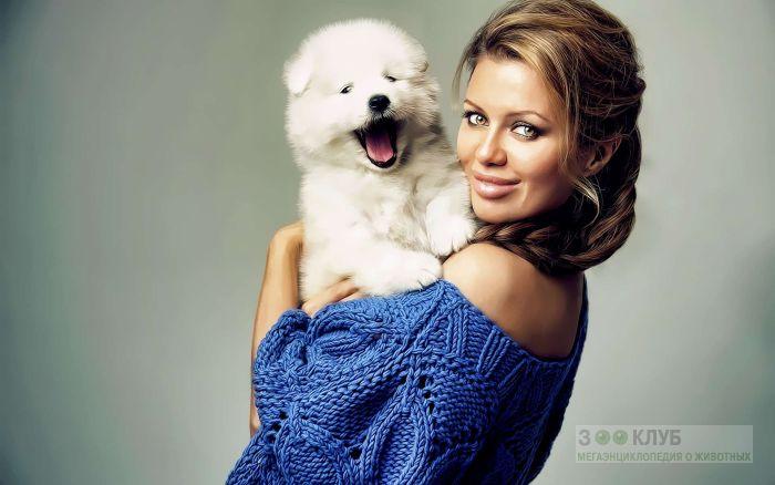 Девушка и щенок самоедской лайки, фото фотография картинка обои