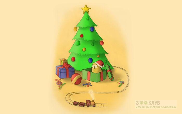 Кот Саймона у новогодней елки, фото фотография картинка обои