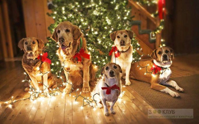 Пять собак сидящих под новогодней елкой, фото фотография картинка обои