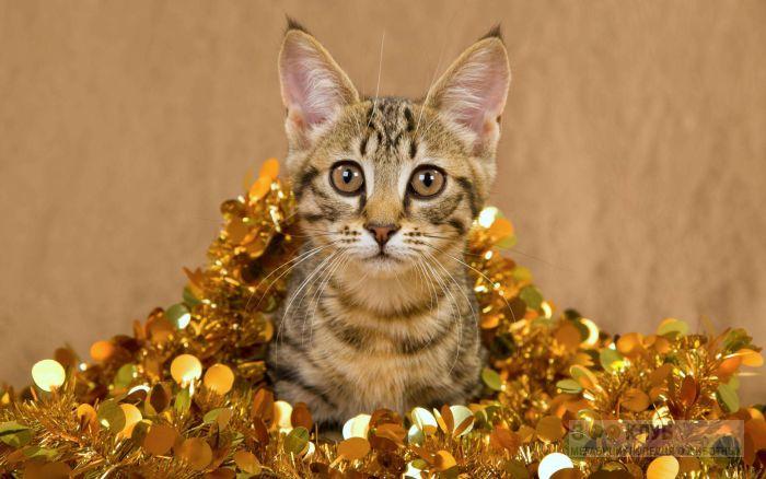 Котенок в новогодней мишуре, фото фотография картинка обои