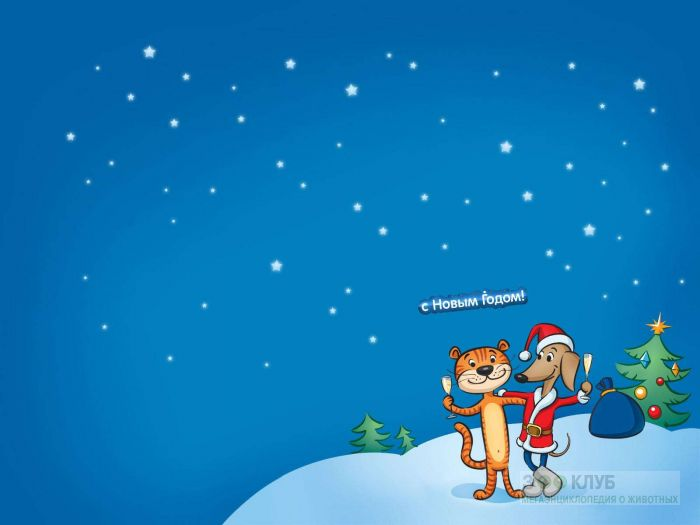 Тигр и собака празднуют новый год рисунок, фото фотография картинка обои