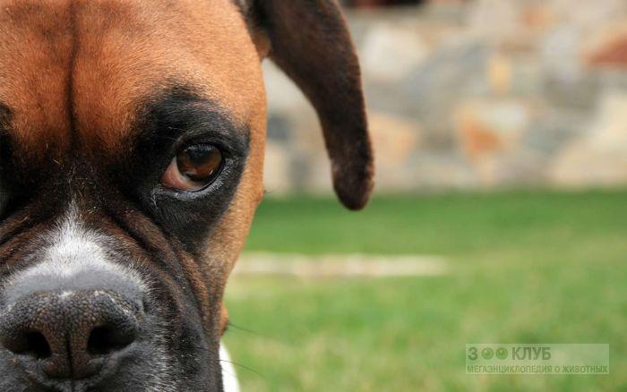 Собака с зубами картинка