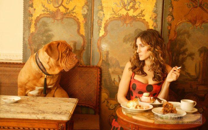 Бордоский дог и девушка, фото фотография картинка обои