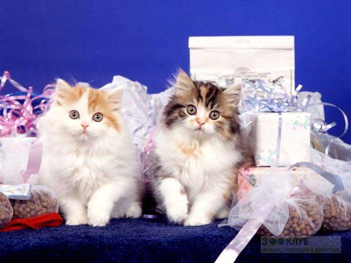 Котята, фото фотография картинка обои
