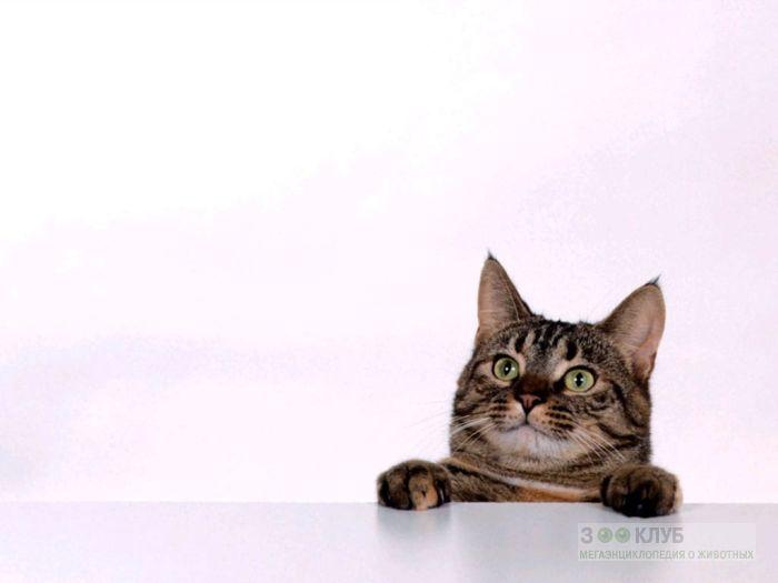 Любопытная кошка, фото фотография картинка обои