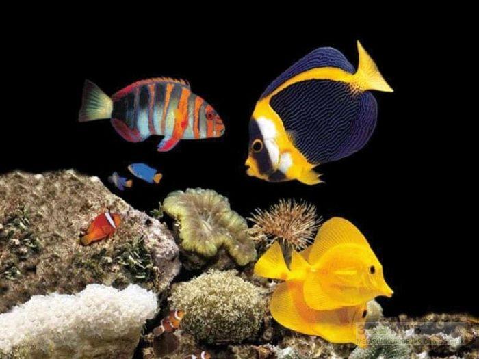 морские рыбы фотообои, фото обои, фотография