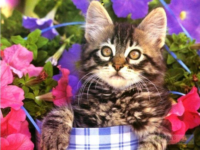 Котенок домашней кошки, фото фотография обои картинка