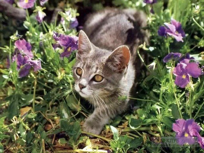 Котенок в траве, фото фотография картинка обои