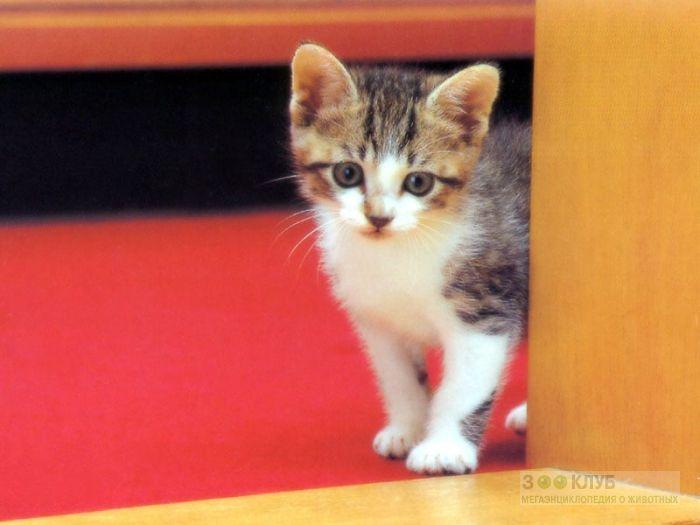 Маленький котенок, фото фотография картинка обои