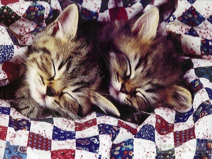 Спящие котята, фото фотография картинка обои