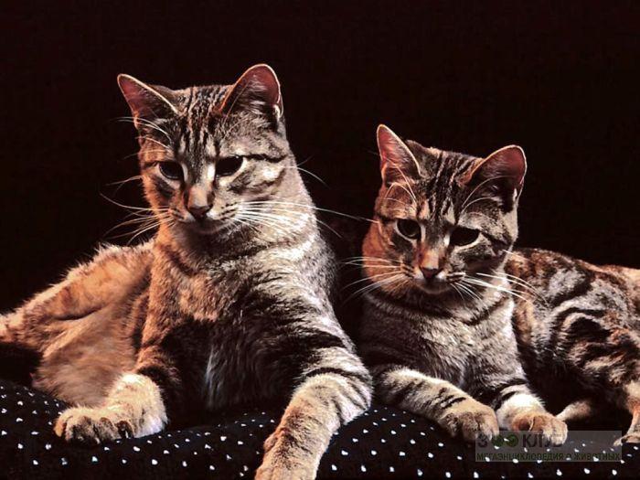 Домашние кошки, фото фотография картинка обои