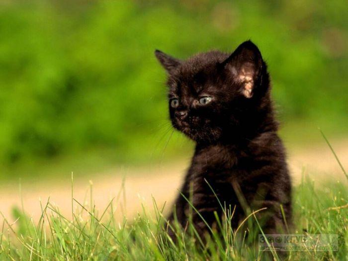 Черный котенок, фото фотография картинка обои