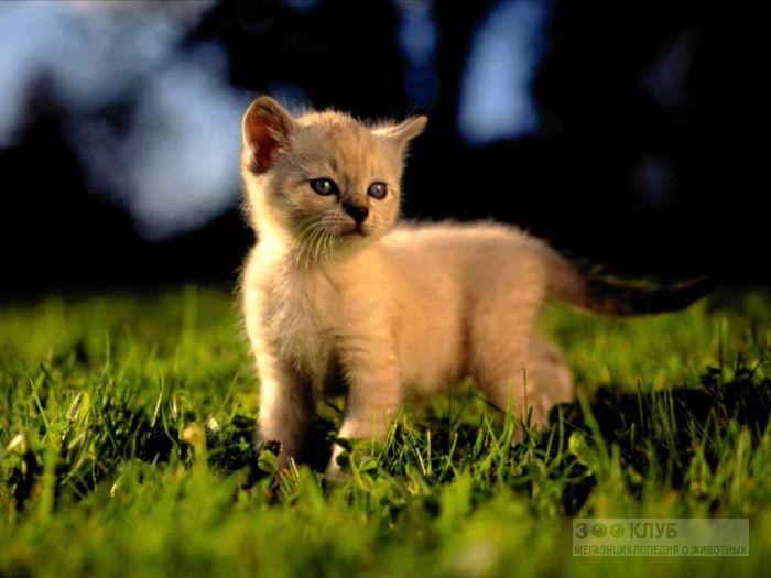 Котенок гуляет по травке, фото фотография картинка обои